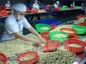Hạt điều Việt Nam có thể làm chủ cuộc chơi toàn cầu
